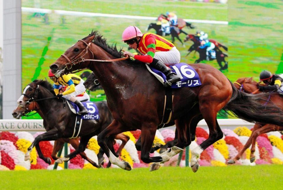ม้าแข่งออนไลน์ รวย